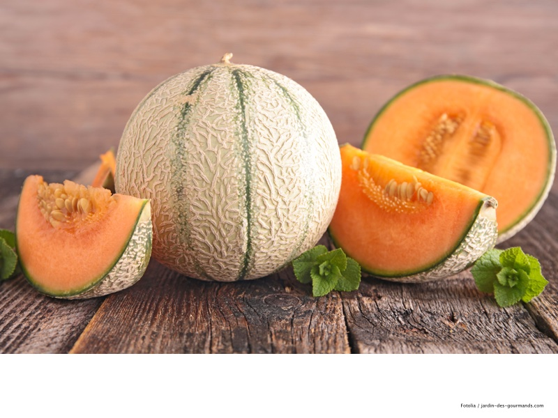 melon-jdg
